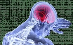 Sportiva Mens - meningite